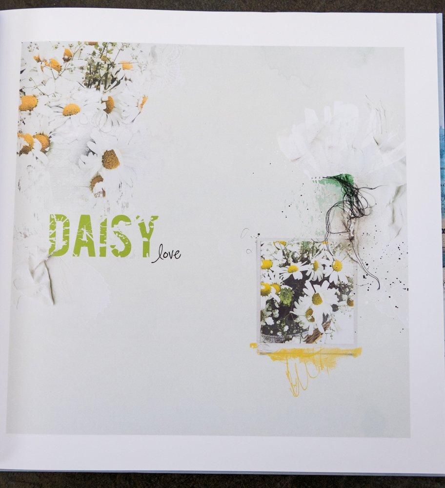 daisy-1020918